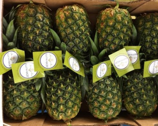 Fresh Fruit and Vegetable Importers & exporters in UK & Europe